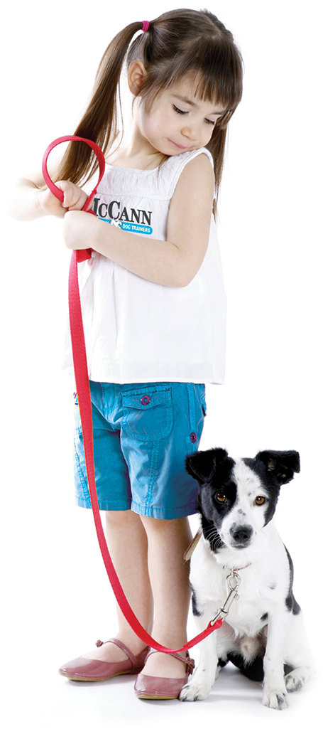 dog-training-Oakville-and-Cambridge