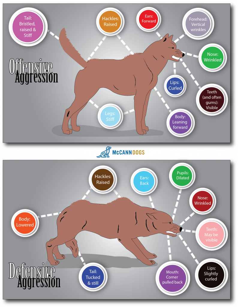 Offensive VS Defensive Aggression in dogs with McCann Professional Dog Trainers