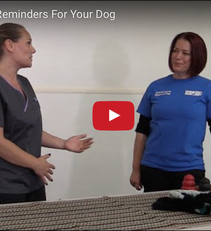 Chewing Safety with McCann Professional Dog Trainers