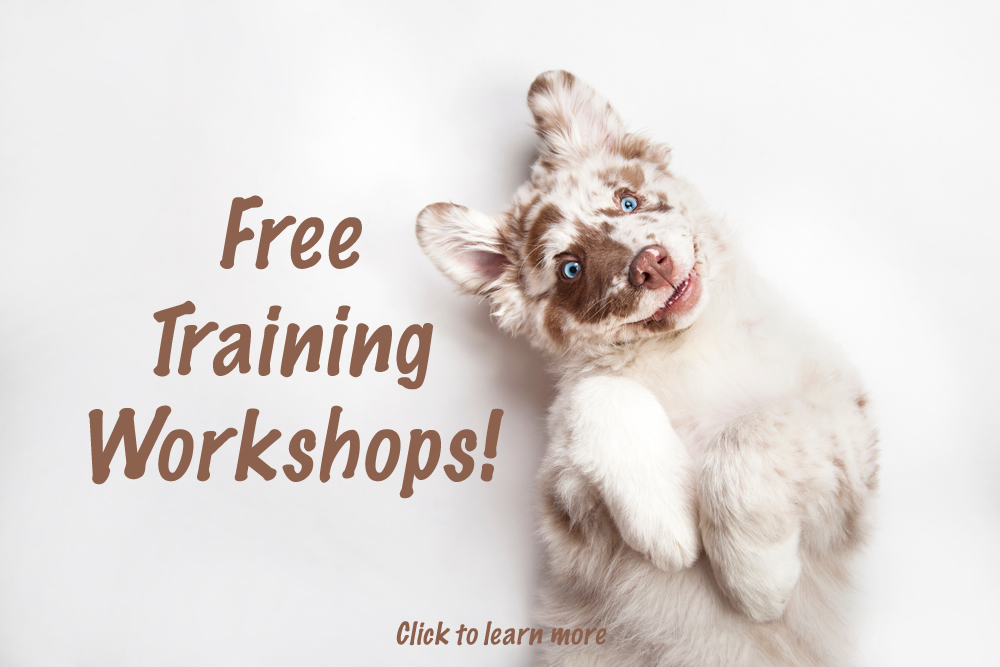 FreeWorkshops
