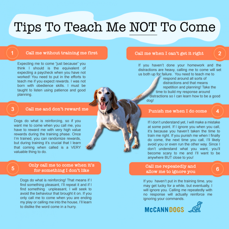 Steps to Finding the Perfect Dog Training