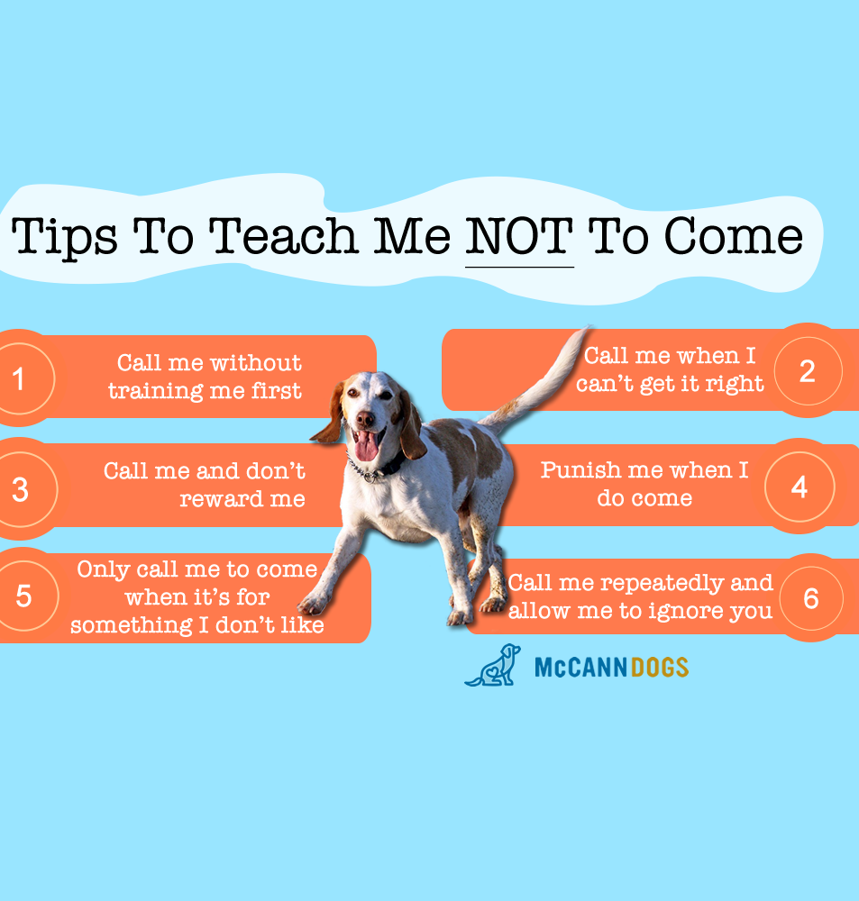 Teach a dog not to come when it's called with McCann Professional Dog Trainers