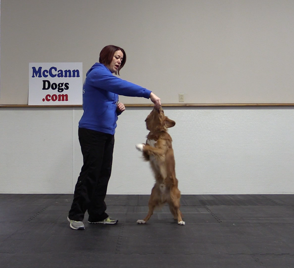 Wanna Supercharge Your Dog S Paw Or Shake Skills Teach How To Use His Touch Diffe Things