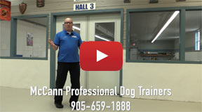 McCann Dog Trainers Video
